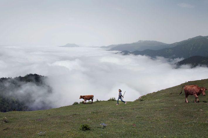 Imagen de una niña y un ternero al borde de un valle lleno de niebla