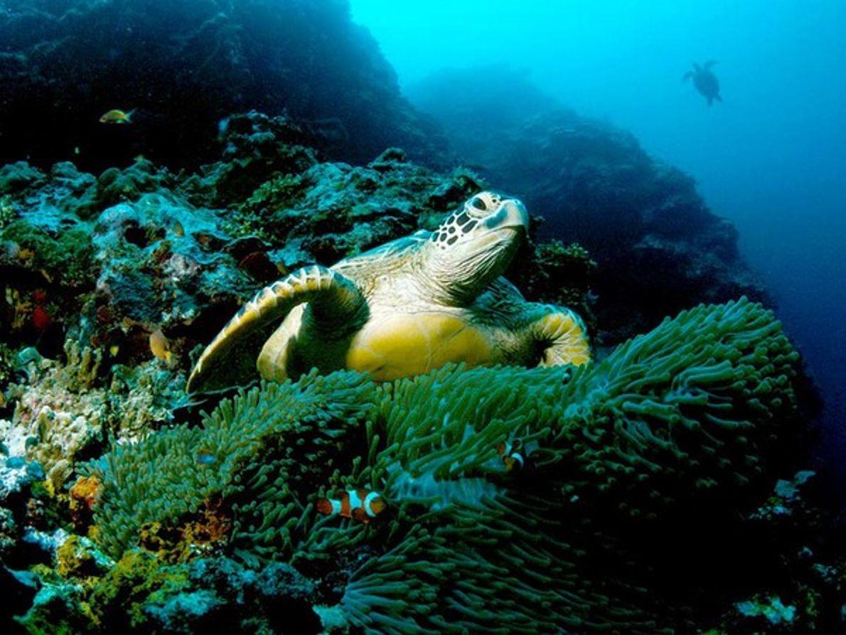 Fauna de las Islas Galápagos