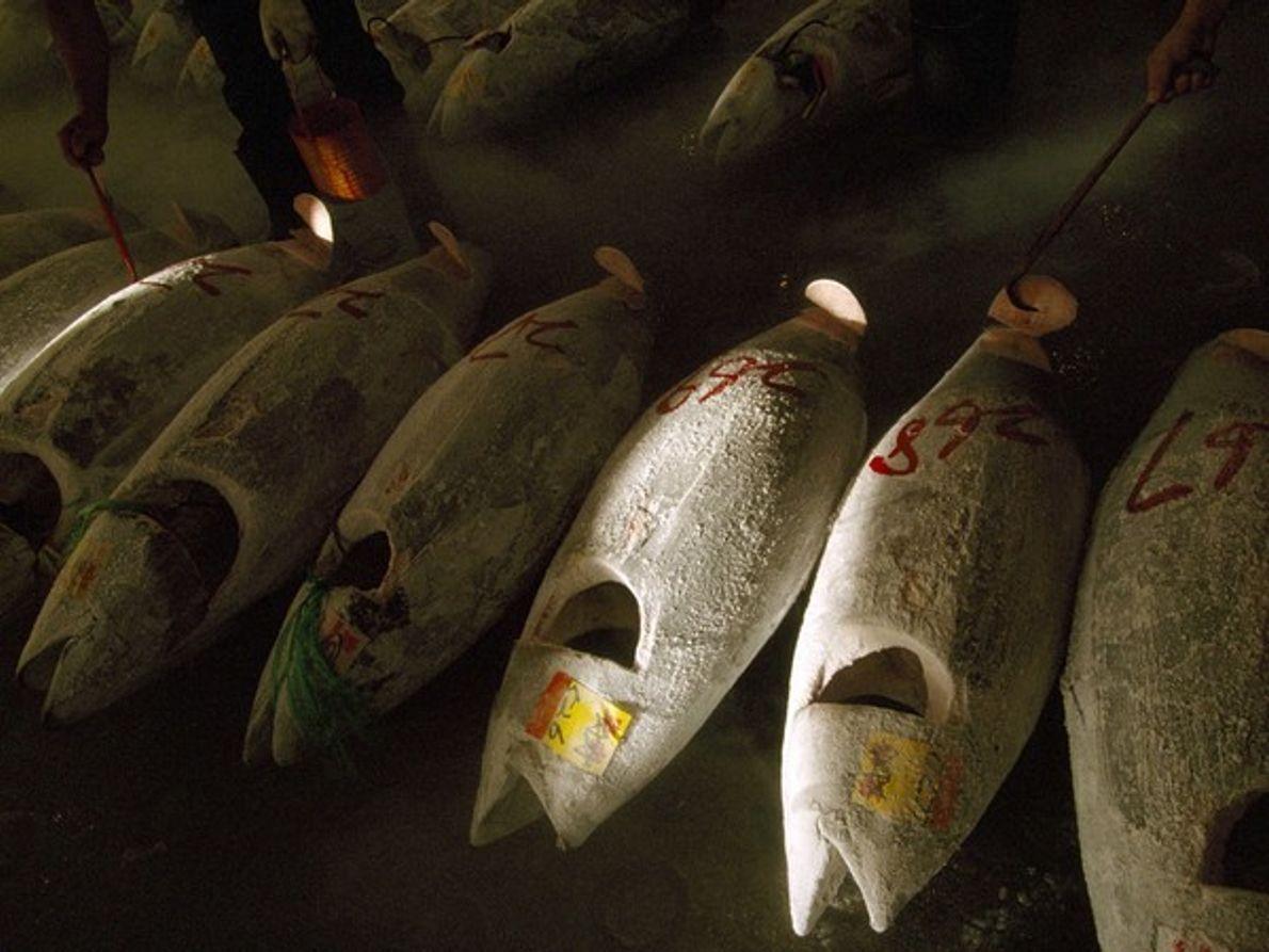 El muy codiciado atún