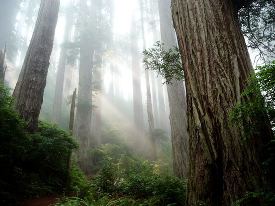 Parque Nacional de Redwood, California
