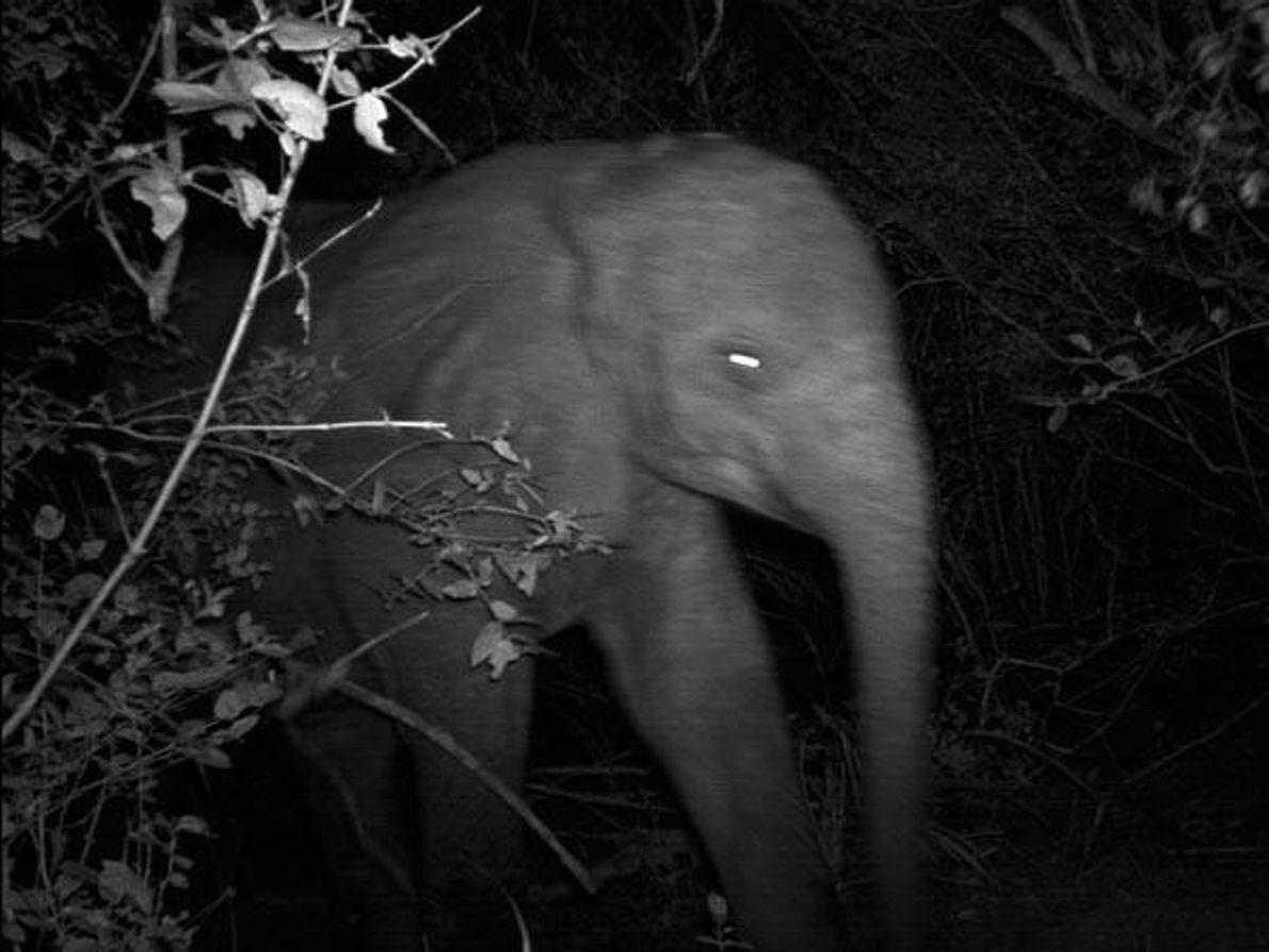 Elefante en movimiento