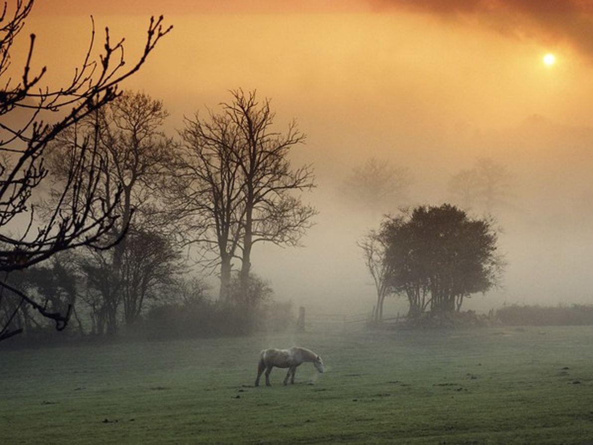 Caballos pastando en la puesta de sol
