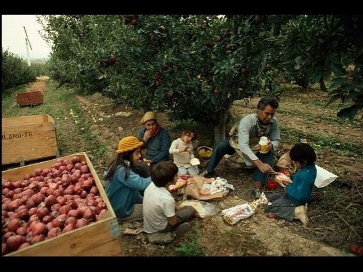 Bajo el manzano