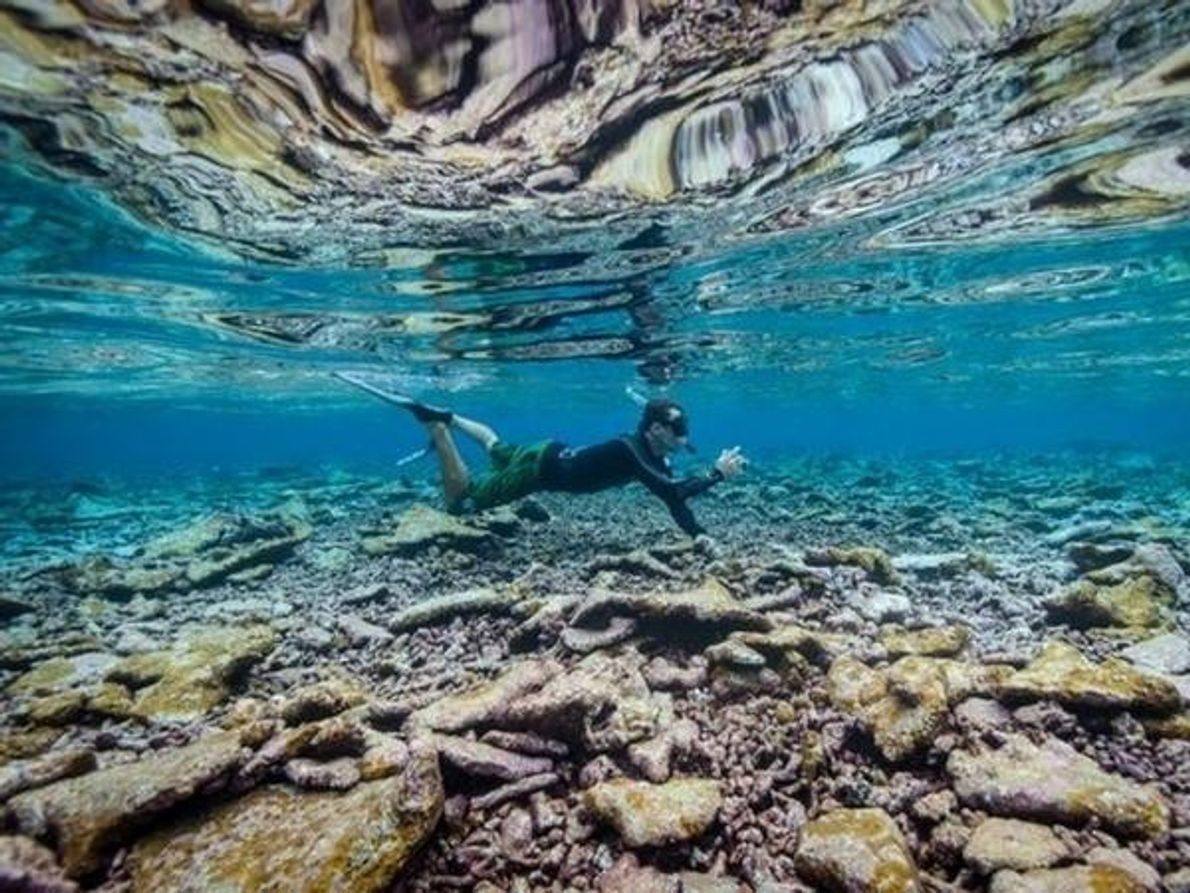Un submarinista estudia la cresta de un arrecife cerca de la isla Cooper, la más grande del …