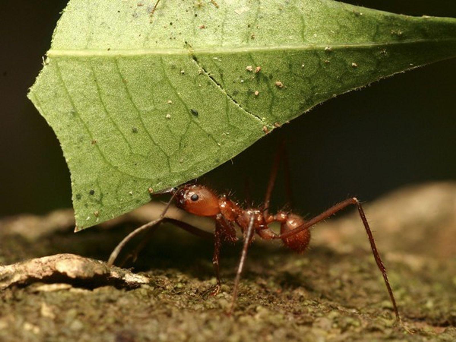Hormigas obreras en la colonia