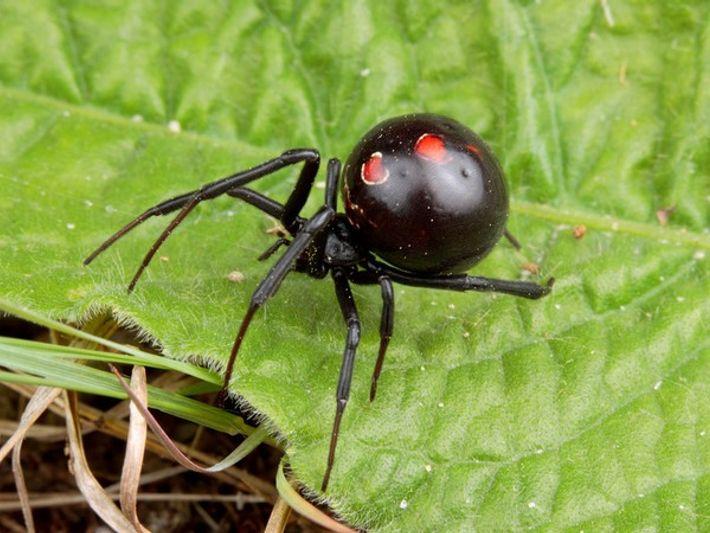Trucos de las arañas para sobrevivir