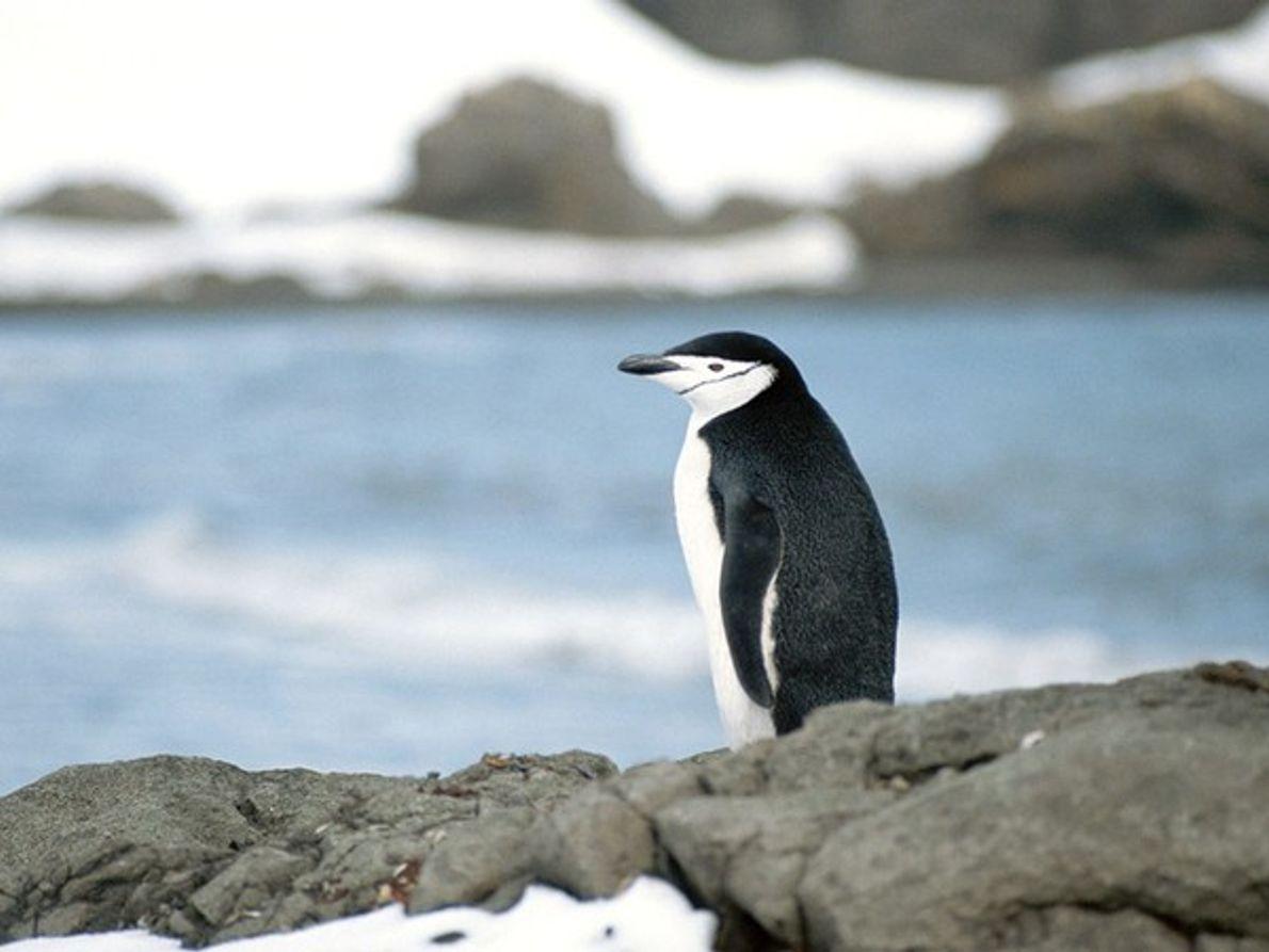 Los Pinguinos y su hábitat