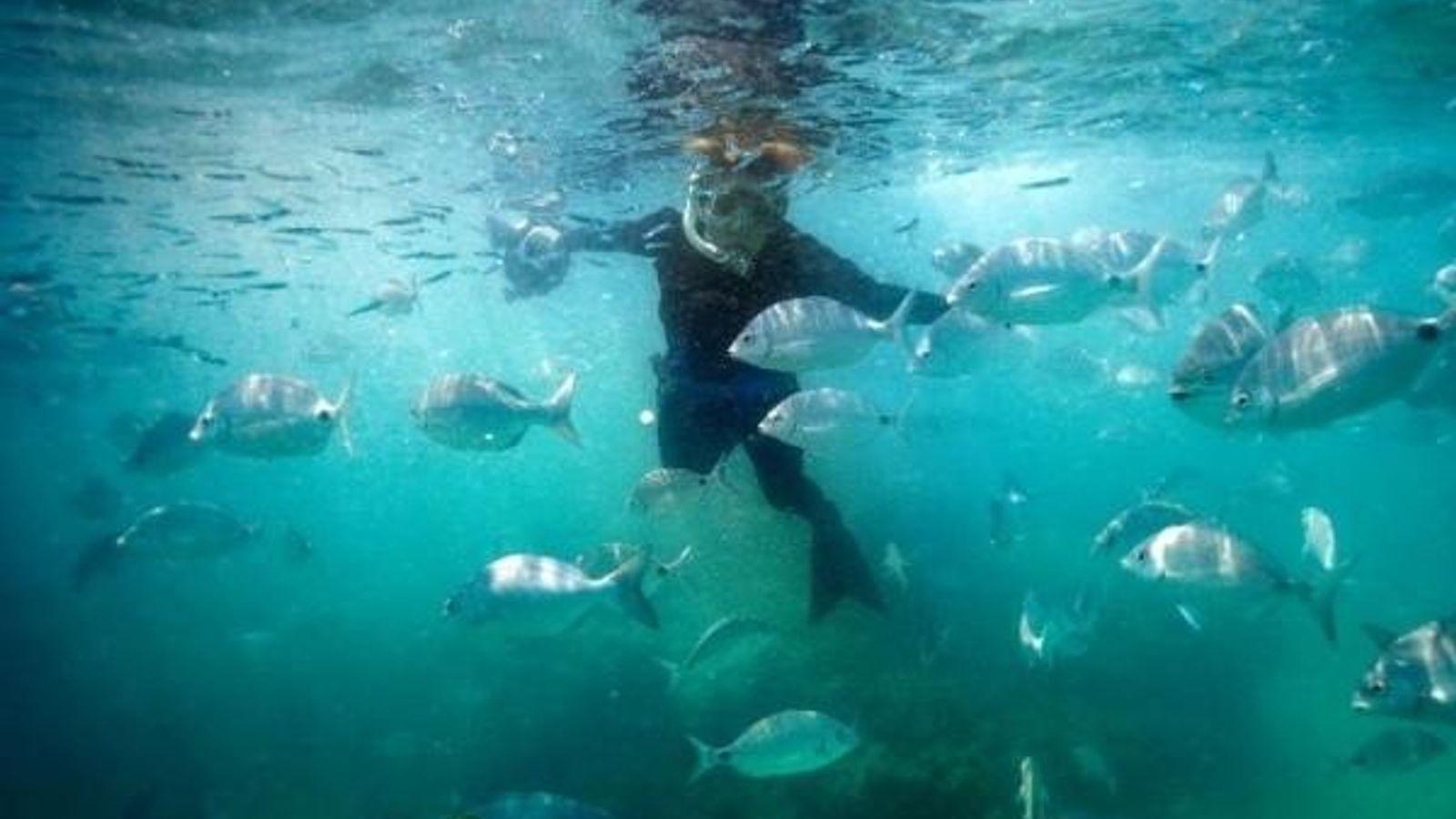 Sylvia Earle rodeada de peces en el mar de los Sargazos