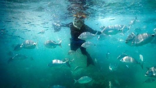 La bióloga marina Sylvia Earle, premio Mujer del año