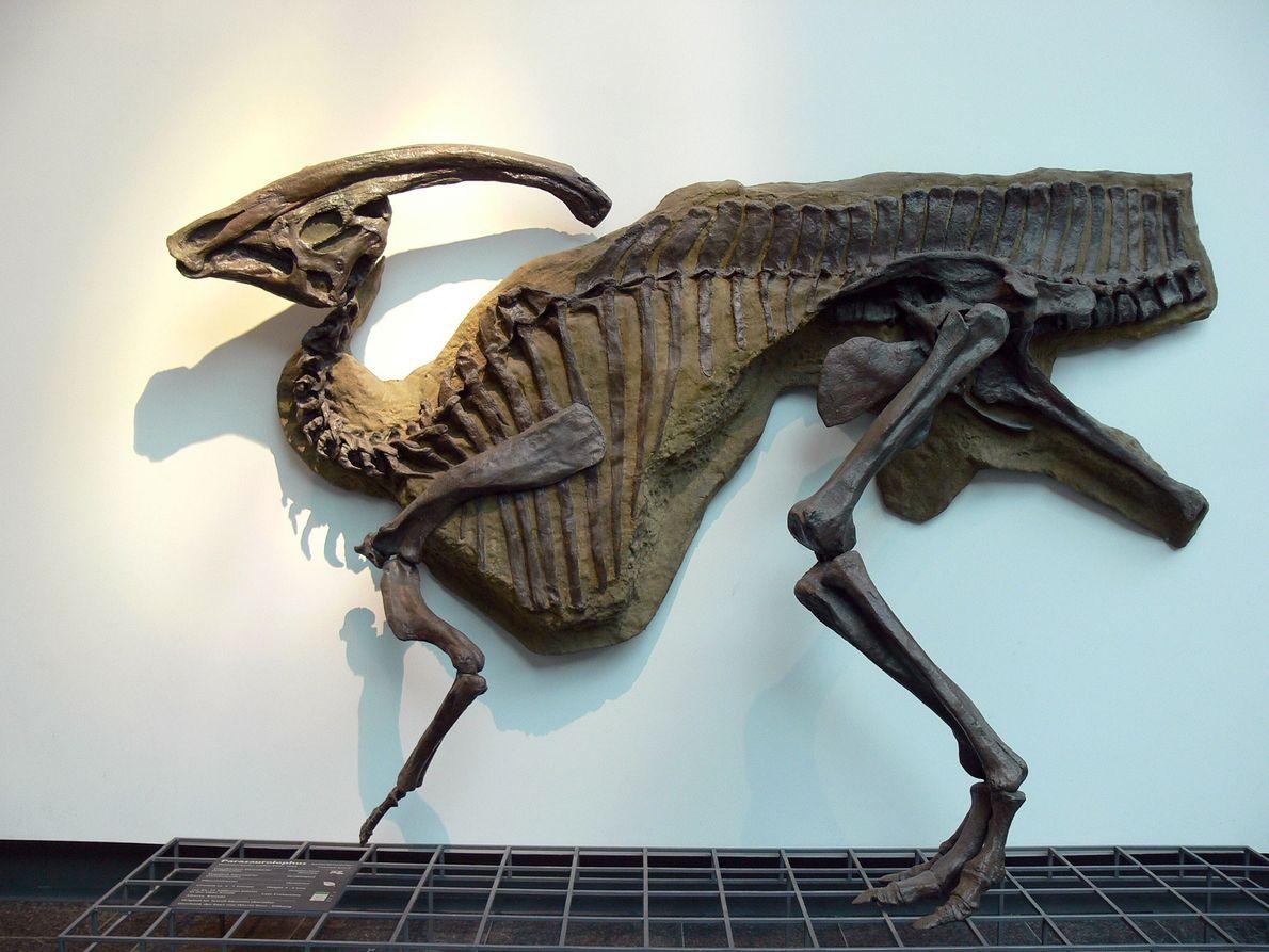 Parasaurolophus walkeri
