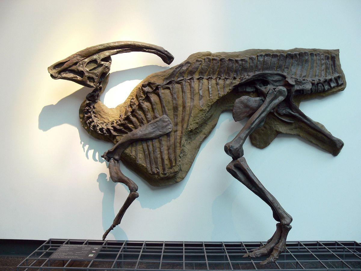 23 Fosiles De Dinosaurios National Geographic Jugá con los dinosaurios que más te gustan, pintándolos, desarmándolos y. 23 fosiles de dinosaurios national