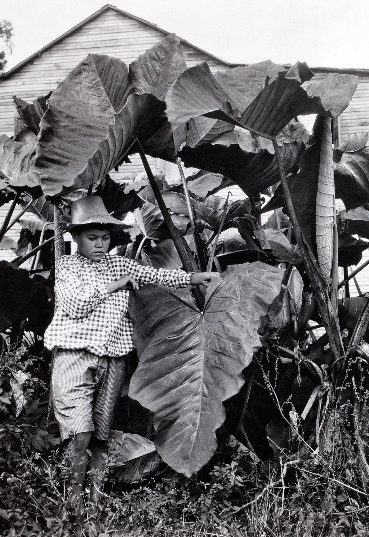 Un niño sostiene los lados de una enorme hoja