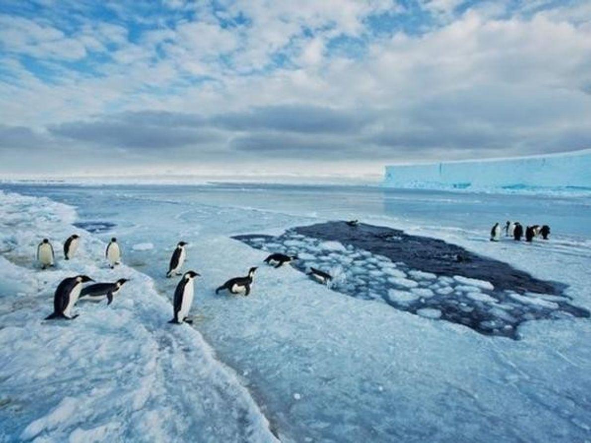 En el hielo