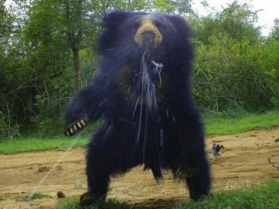 Fotografías de animales tomadas con cámara trampa