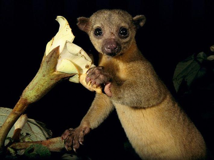 ¿Dónde vive este curioso animal?