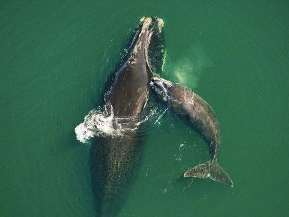 Bebé ballena