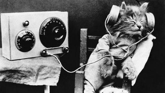 Música para animales