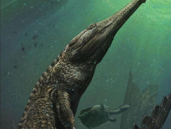 El Machimosaurus pudo haber medido 10 metros de longitud.