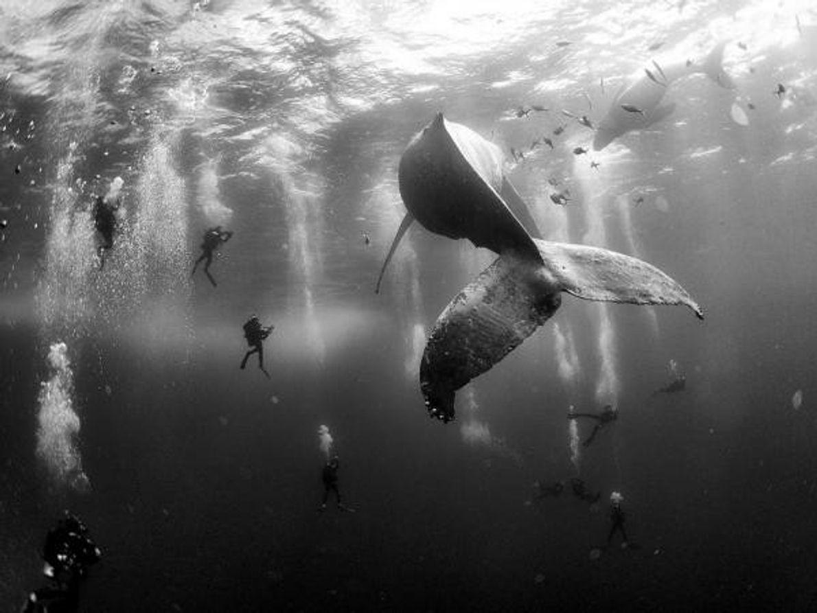 Esta foto de buceadores alrededor de una ballena jorobada y su hijo recién nacido no solo …