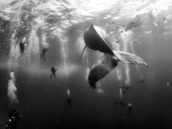 """""""Susurradores"""" de ballenas"""