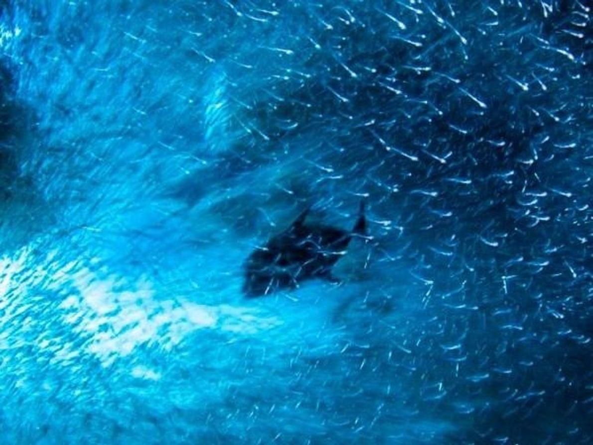 Frenesí acuático