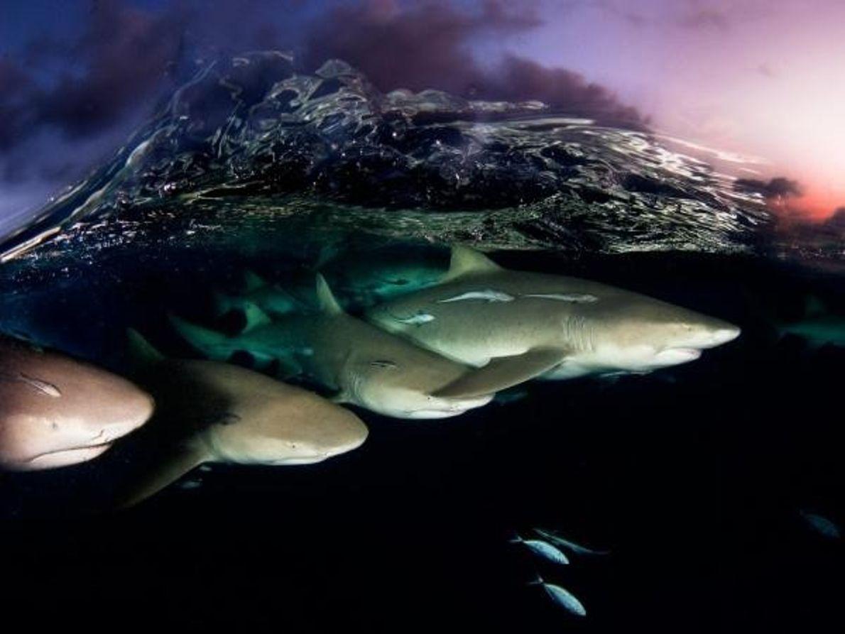 Nadar al atardecer