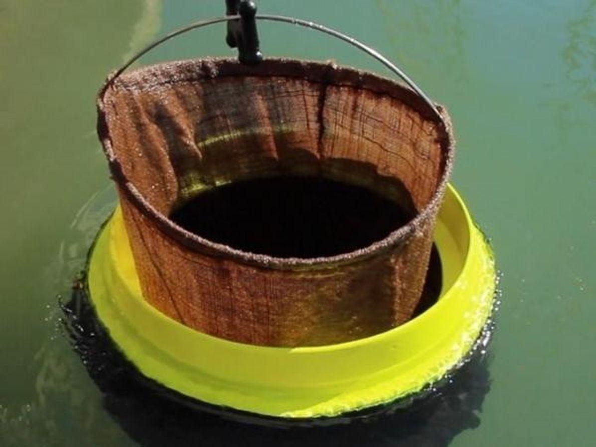 8 inventos para mejorar el medio ambiente