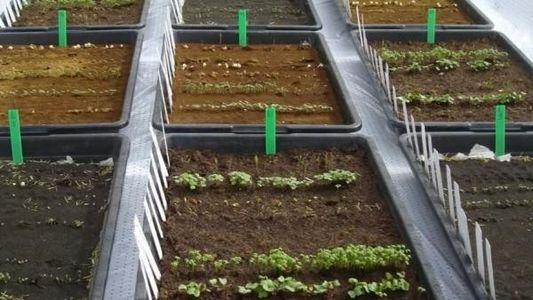 Verduras en Marte: cada vez más cerca de la comida marciana