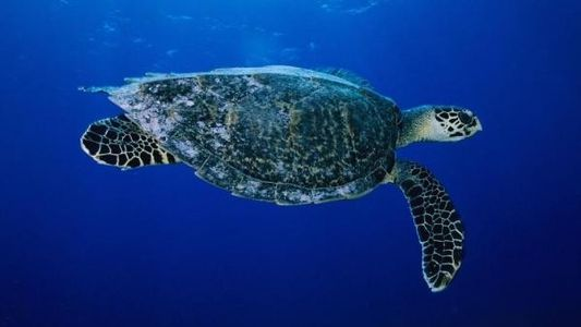Descubre cómo el GPS podría salvar a las tortugas marinas