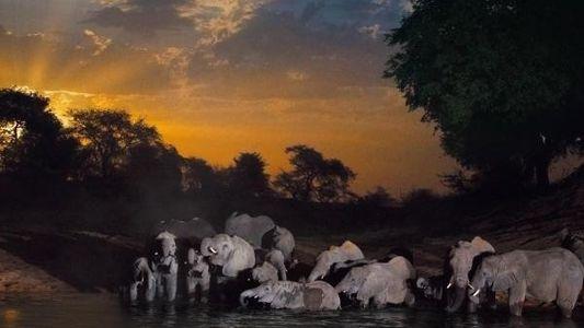 Celebramos el Día Mundial del Elefante
