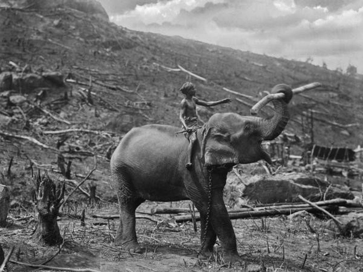 El comercio de madera y los elefantes