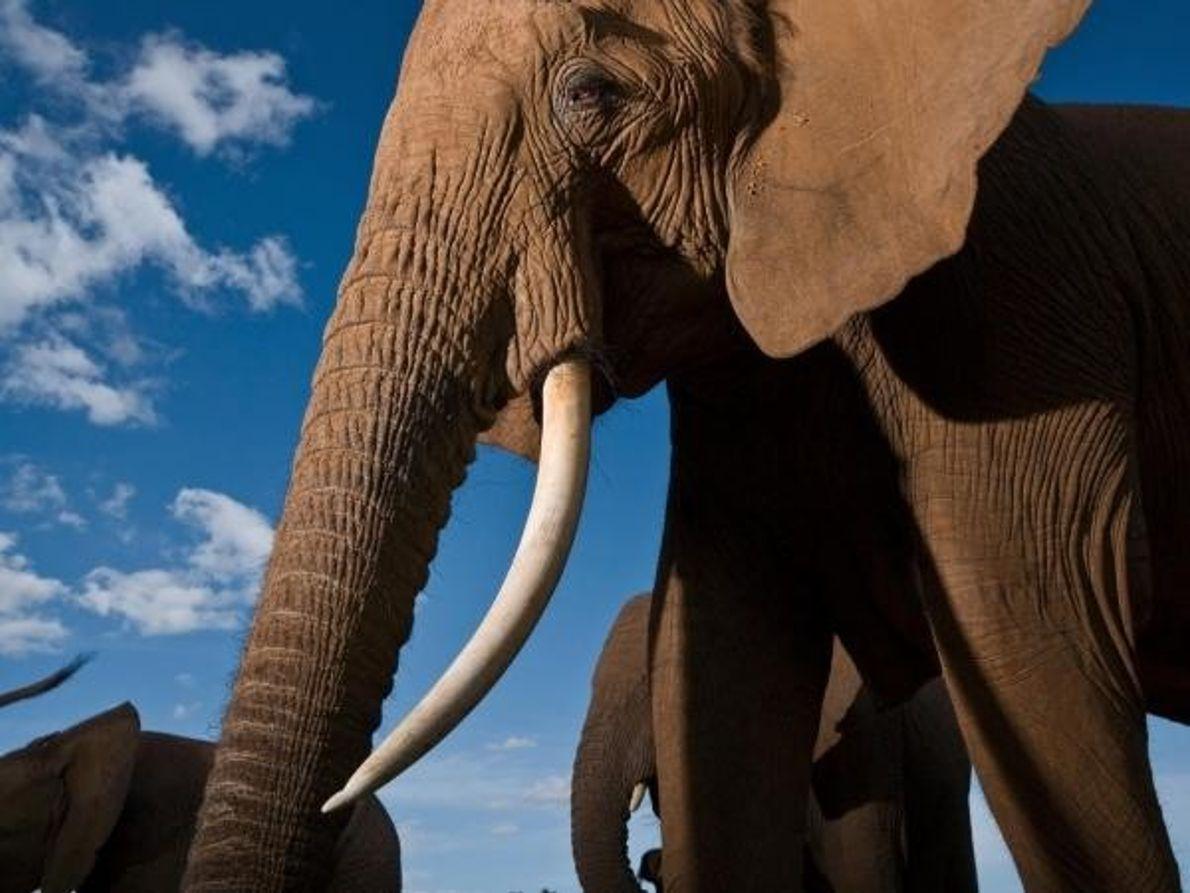 ¡Feliz Día Mundial del Elefante!