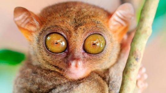 Descubre qué animales tienen los ojos más grandes