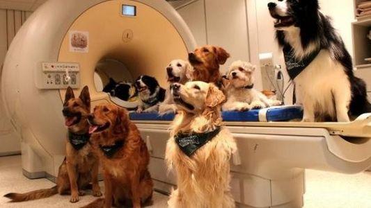 Los perros saben exactamente qué decimos y cómo lo decimos