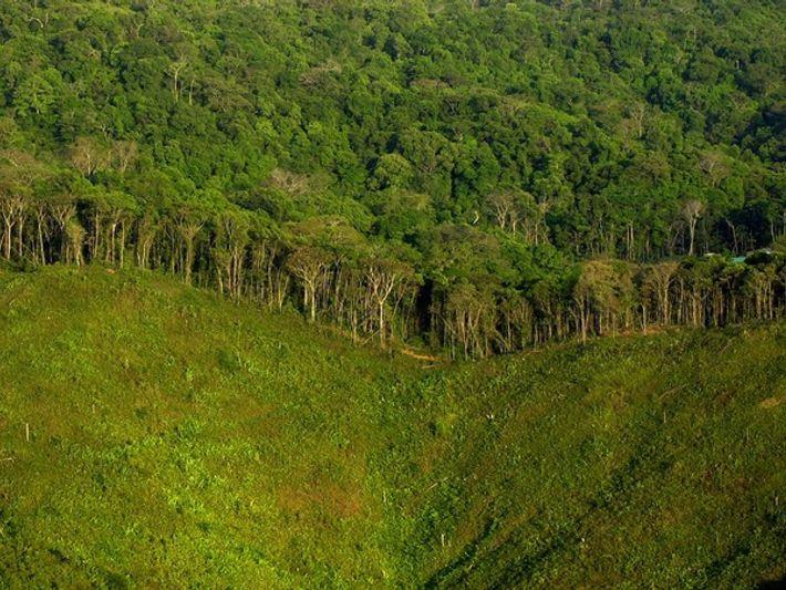 Deforestación cerca de Ciudad de Panamá