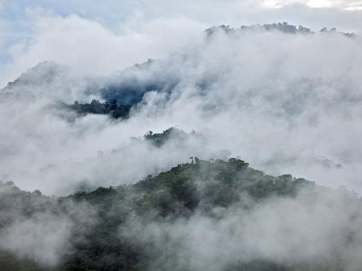 Bosque nuboso de Chocó – Ecuador