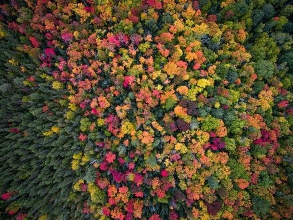 Las imágenes más bellas del otoño tomadas por drones