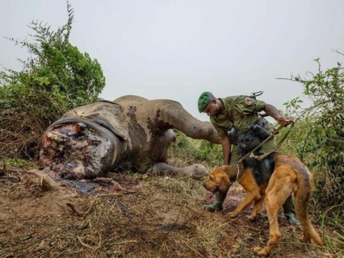 Guardabosques contra cazadores furtivos
