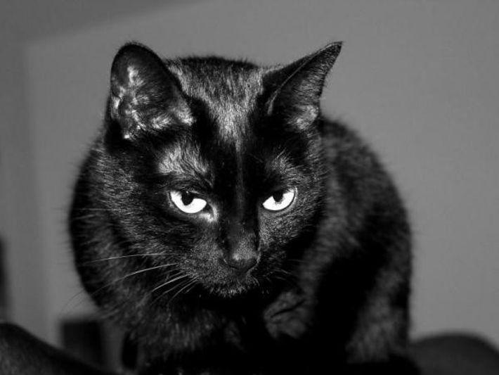 ¿Por qué persisten algunas supersticiones como la del gato negro?