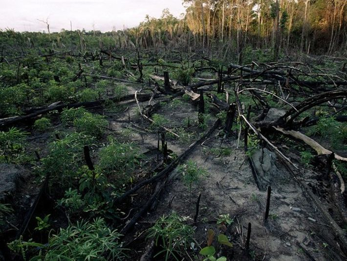 Amenazas para los bosques pluviales