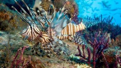 Más de 700 especies invasoras amenazan el Mediterráneo