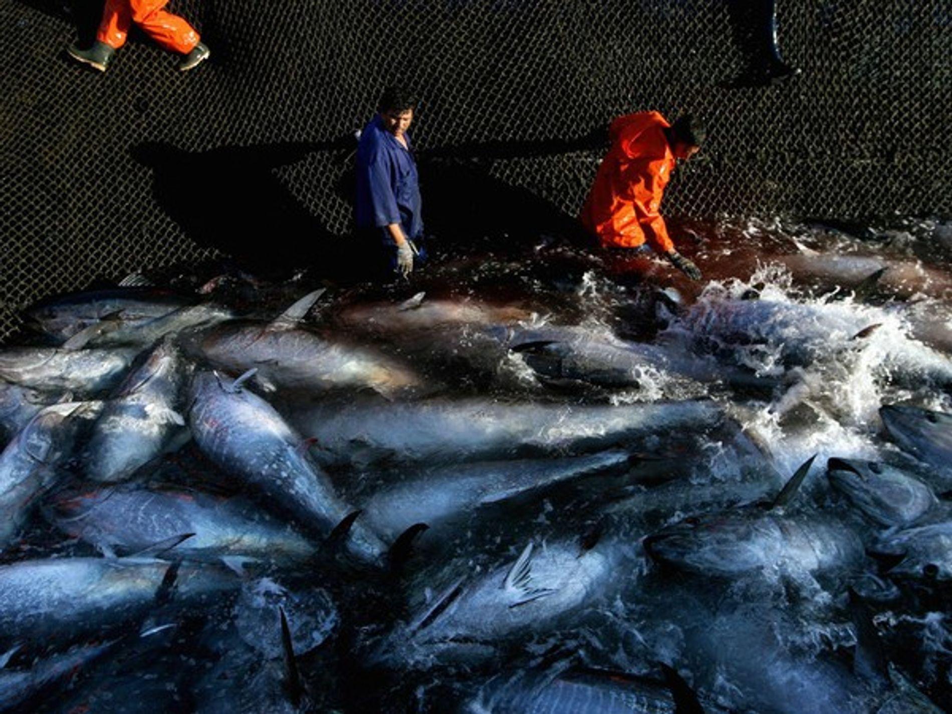 La sobrepesca