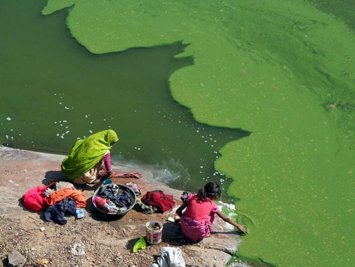Lago cubierto por algas verdes