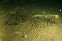 El esqueleto encontrado en México