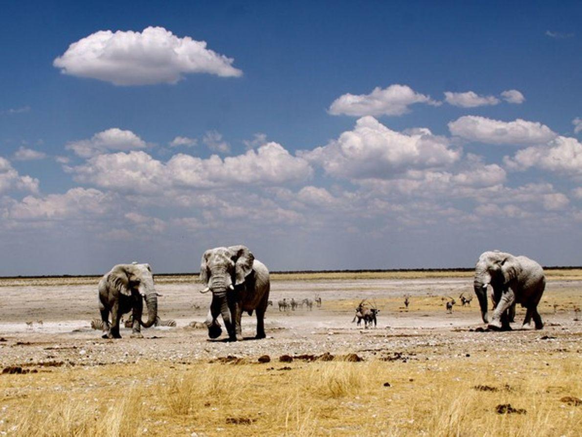 Elefantes junto a un manantial