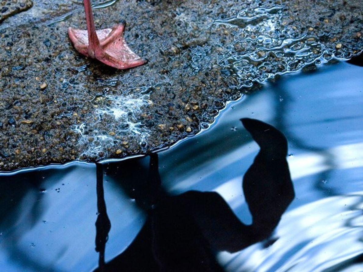 Reflejo de la pierna de un flamenco