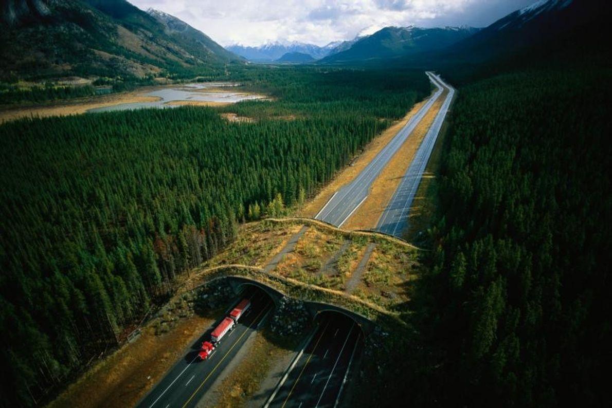 Paso a nivel en Alberta, Canadá