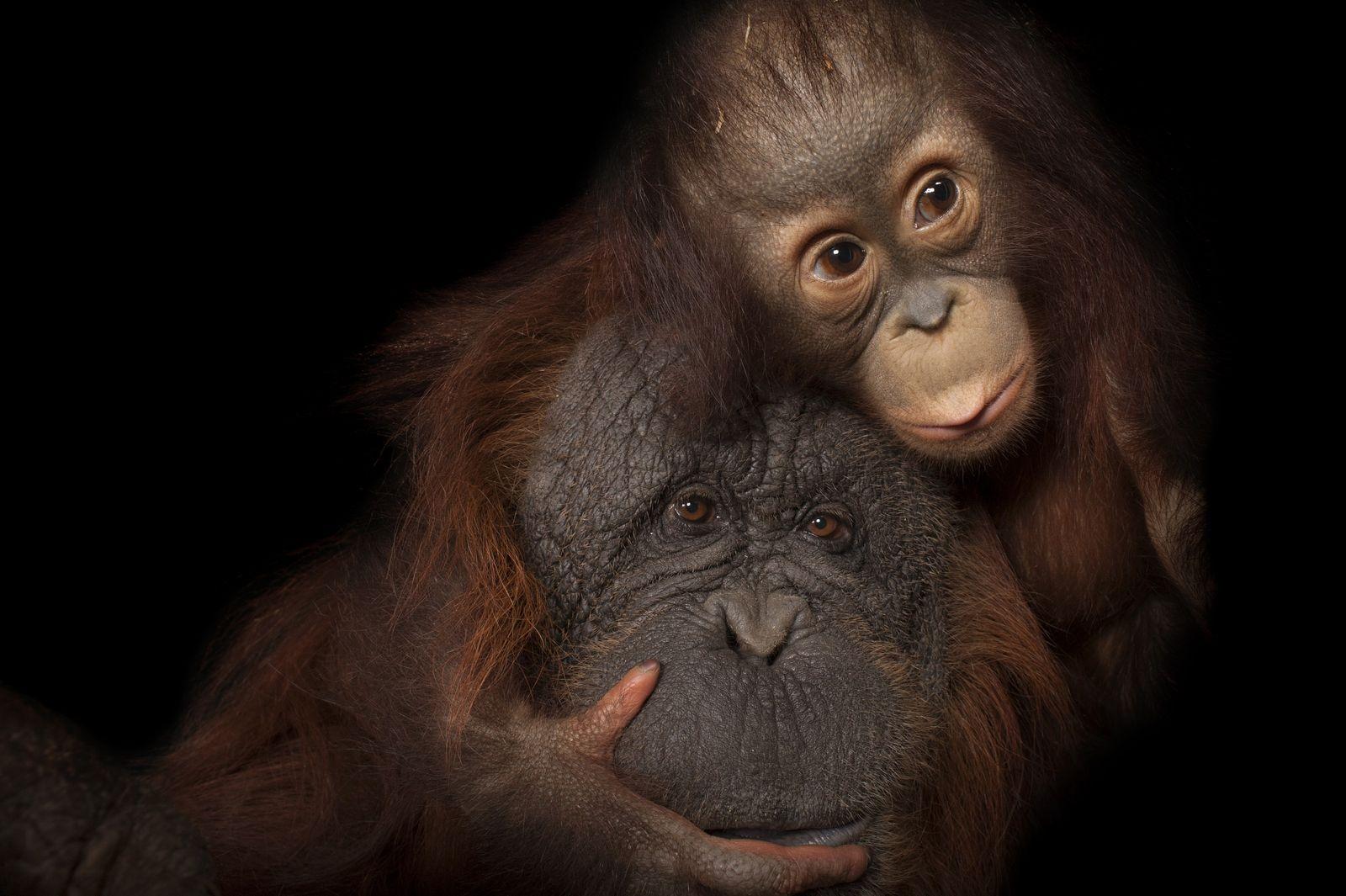 National Geographic prorroga la exposición Photo Ark en el Museo Nacional de Ciencias Naturales (MNCN-CSIC) de ...