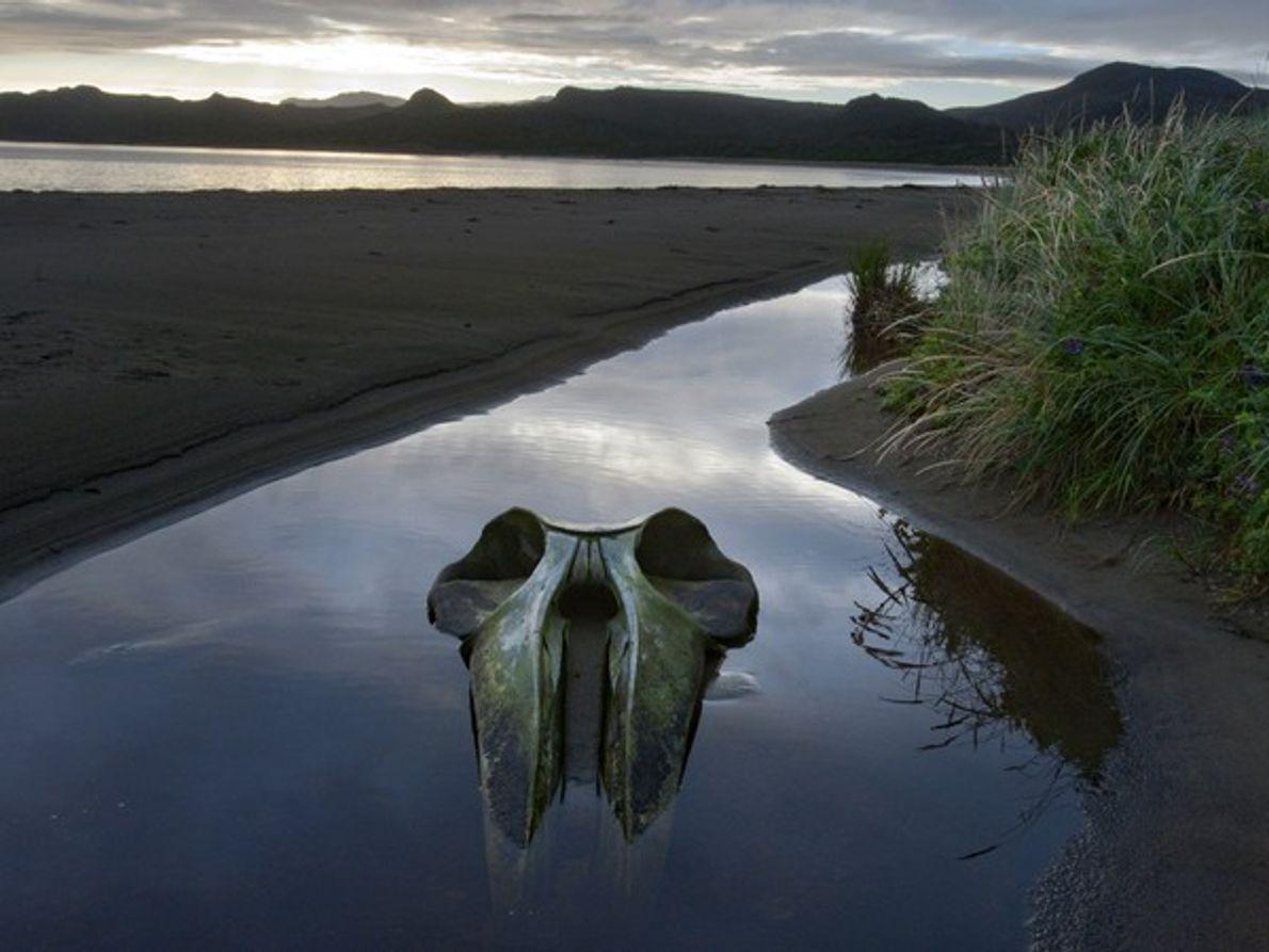 Cráneo de ballena en una cala