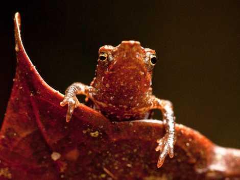 Los 10 Animales Más Raros Del Mundo National Geographic